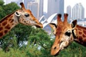 Taronga Zoo Express Cruise -