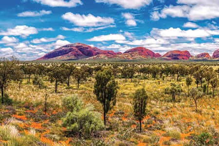2 Day Alice Springs to Uluru Explorer - Bushwalking, Nature & Wildlife