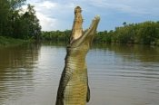 Jumping Crocodiles Tour -