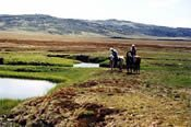 Half Day Horse Riding Adventure -