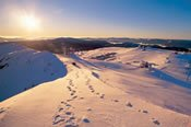 Mt Buller Snow Full Day Tour -