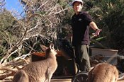 Currumbin Wildlife Sanctuary Segway Safari Tour -