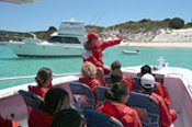 Rottnest Island with Eco Cruise Adventure - Dolphin Swim & Whale Watch