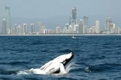 Half Day Whale Watching -