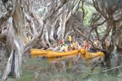 Margaret River Cave and Canoe Tour -