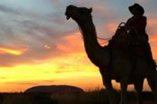 Uluru Sunrise Camel Tour -