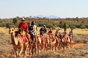 Express Camel Ride -