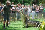 Daintree, Port Douglas and Mossman Gorge Tour -