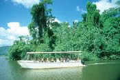 Cape Tribulation, Port Douglas and Daintree Rainforest Safari -