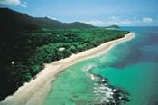 Cape Tribulation and Daintree Rainforest Safari -