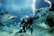 Shark Dive Xtreme at SEA LIFE Melbourne Aquarium -