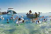 Tangalooma 2 Day Wild Dolphin Resort Adventure -