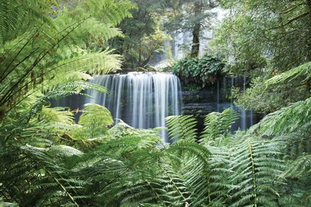 Mt Field, Russell Falls and Bonorong Wilderness and Wildlife Day Tour -