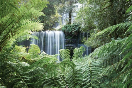 Mt Field and Bonorong Conservation Park Tour -