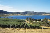 Hobart Winery Tour -