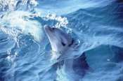1 Day Dolphin and Seals Adventure Tour -