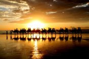 Half Day Broome Sights Tour with Optional Sunset Camel Ride - Bushwalking, Nature & Wildlife
