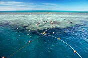 Great Barrier Reef Reef Discovery Helicopter Flight -
