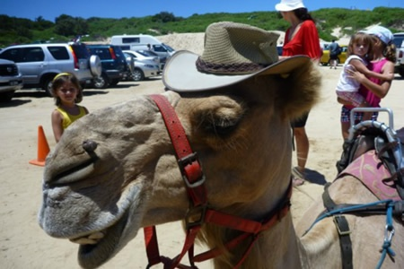 Port Stephens Camel Ride Adventure - Kids Outdoors