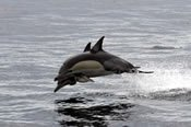 Dolphin Watch Cruise and Tin City Tour from Newcastle -
