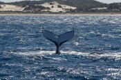 Tangalooma Whale Watching Day Cruise -