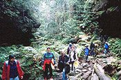 Blue Mountains Grand Canyon Guided Walk -