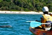 Wildlife Kayaking Tour -