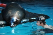 Seal Swim at SEA LIFE Mooloolaba -