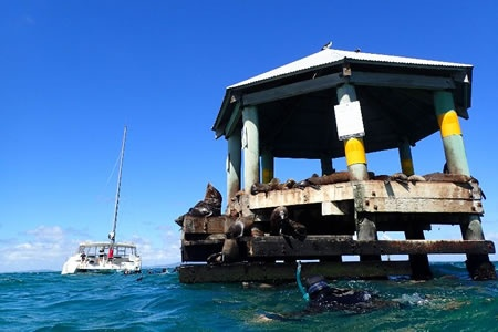 Sail and Snorkel with Seals on the Mornington Peninsula -