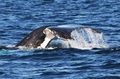 Winter Whale Cruise -