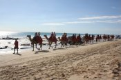 Morning Camel Ride along Cable Beach -