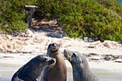 Three Islands Wildlife Cruise -