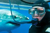Swim with the Great White Sharks Tour -