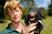 Tasmanian Devils and Bonorong Wildlife Sanctuary Half Day Tour -