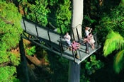 Mount Tamborine Experience Hop On Hop Off Tour -