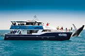 Hervey Bay Half Day Whale Watching Cruise -