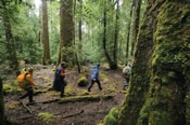 4 Day Tarkine Rainforest Walk -