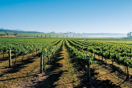 Boutique Wine Tour and Scenic Flight to Mudgee - Scenic Flights