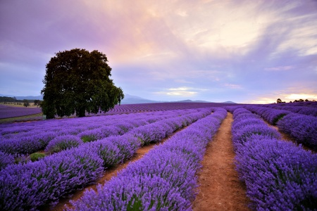 Bridestowe Lavender Farm Day Tour - Bushwalking, Nature & Wildlife