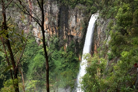 Natural Bridge and Springbrook 4WD Tour
