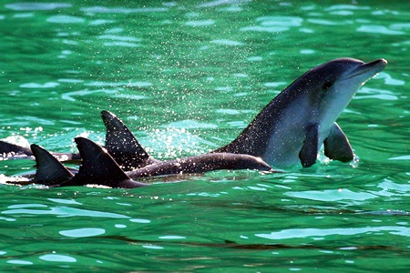 Dolphin Watch 90 Minute Cruise -