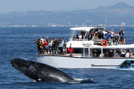 Whale Watching including Canal Cruise