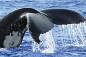 Whale Watching including Canal Cruise -