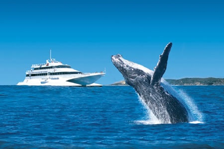 Whale Watching Cruise -