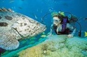 Outer Barrier Reef - Reef Magic Cruises -