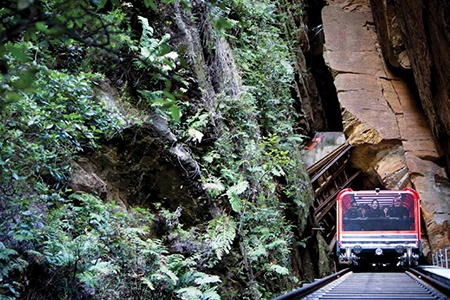 Blue Mountains and Wildlife Experience including Cruise - Trains