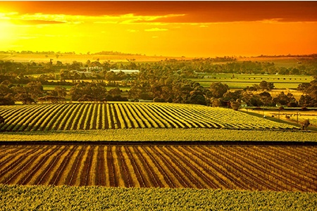 Grand Barossa Valley Tour with Hahndorf - Bushwalking, Nature & Wildlife