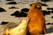 Kangaroo Island Day Tour -