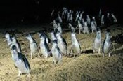 Penguin Express Tour -