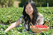 Mornington Peninsula with Strawberry Picking -